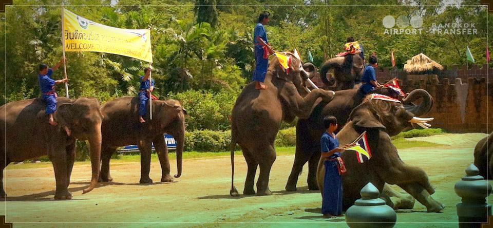 نمایش فیل ها در تایلند