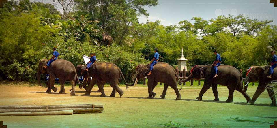 Crocodile Farm and Elephant Show